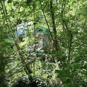 Frêne doré : Chambres insolites en forêt du Domaine Jean Got